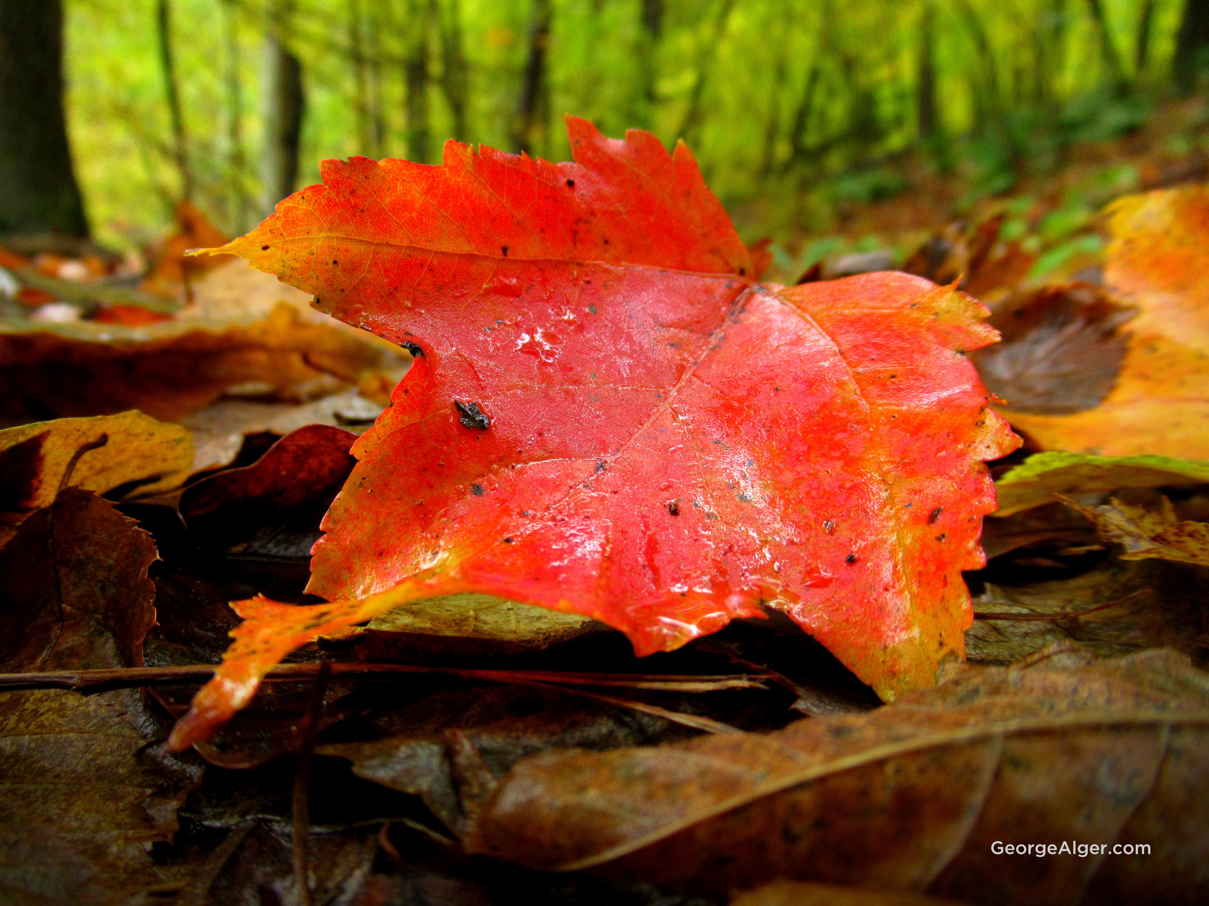 Freshly Fallen, by George Alger