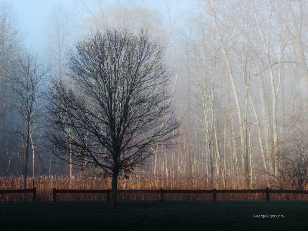 Sunrise Marsh Mist